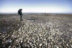 【雨果早报】福州跨境电商完成直购第一票  丹麦生蚝或以跨境模式进口中国