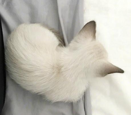 一只八卦的猫