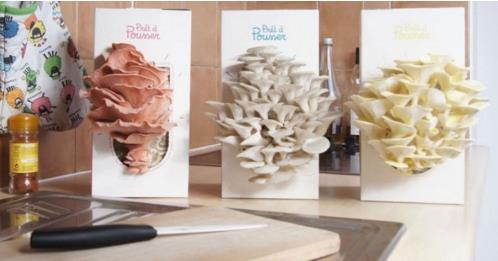 """法国""""神奇""""盆栽   十天时间即可吃到新鲜蘑菇"""